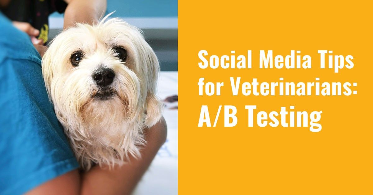 Social Media Tips for Veterinarians: A/B Testing