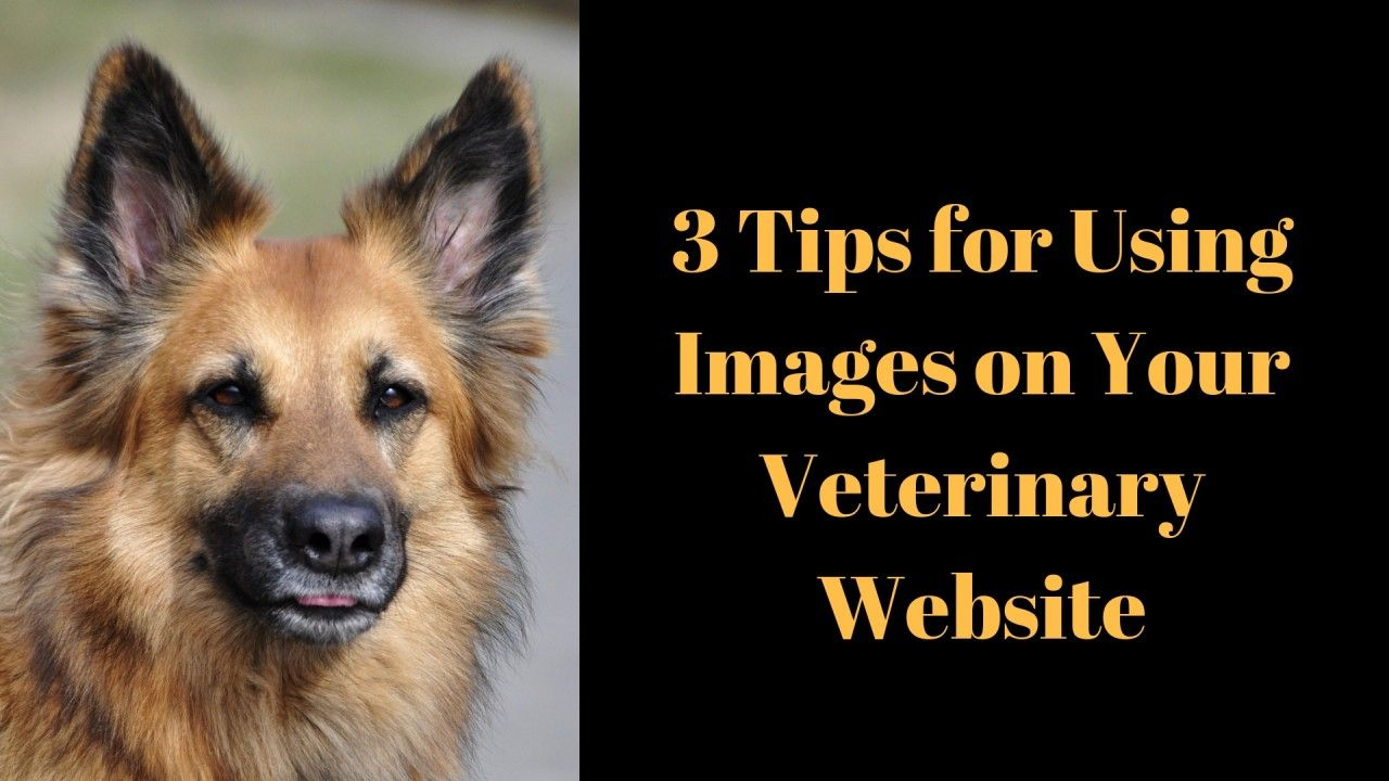 3-Tips-for-Using-Images-on-Your-Veterinary-Website-2