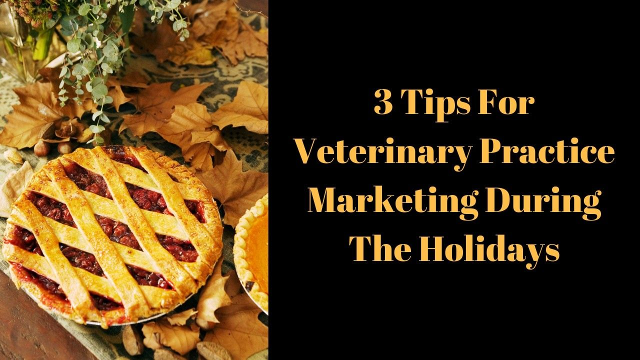 3 Tips For Veterinary Practice Marketing During The Holidays